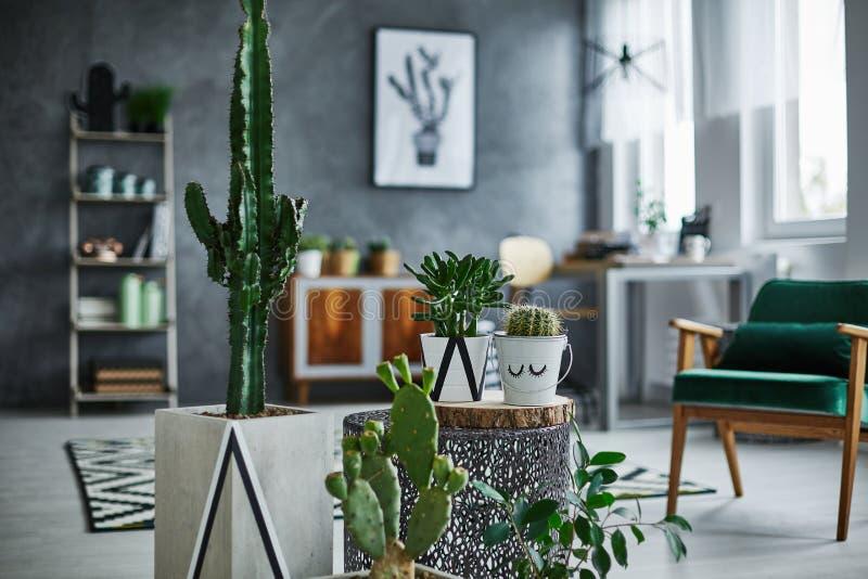 Pièce avec des décorations de cactus images stock