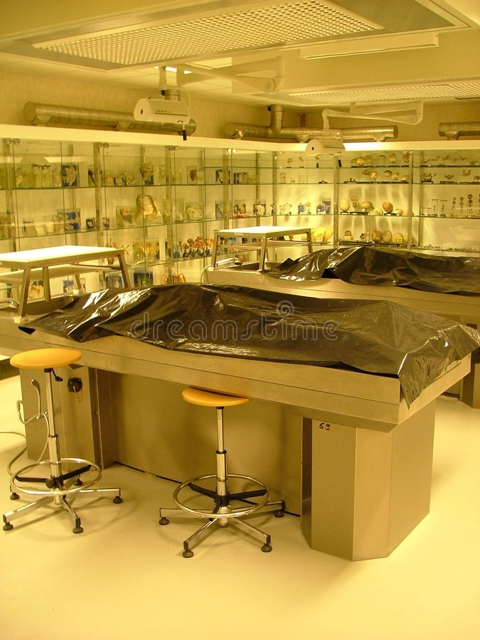 Pièce d'autopsie photos stock