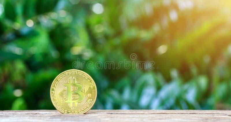 Pièce d'or de Bitcoin sur la table en bois avec le fond naturel, Bitco photo libre de droits