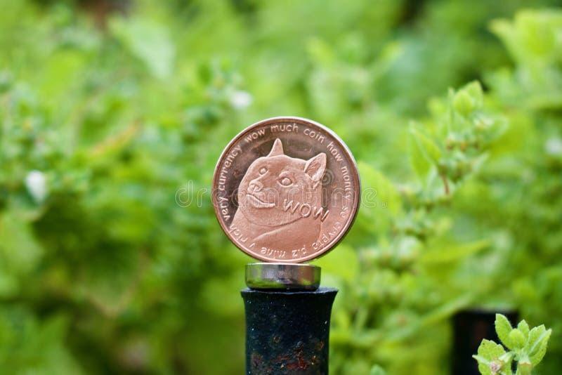 Pièce de monnaie en laiton de dogecoin photographie stock