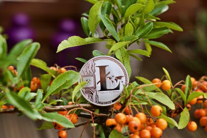 Pièce de monnaie de Litecoin sur l'arbre photo stock