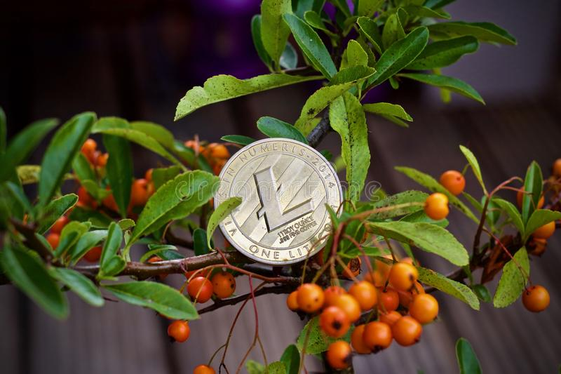 Pièce de monnaie de Litecoin sur l'arbre image stock