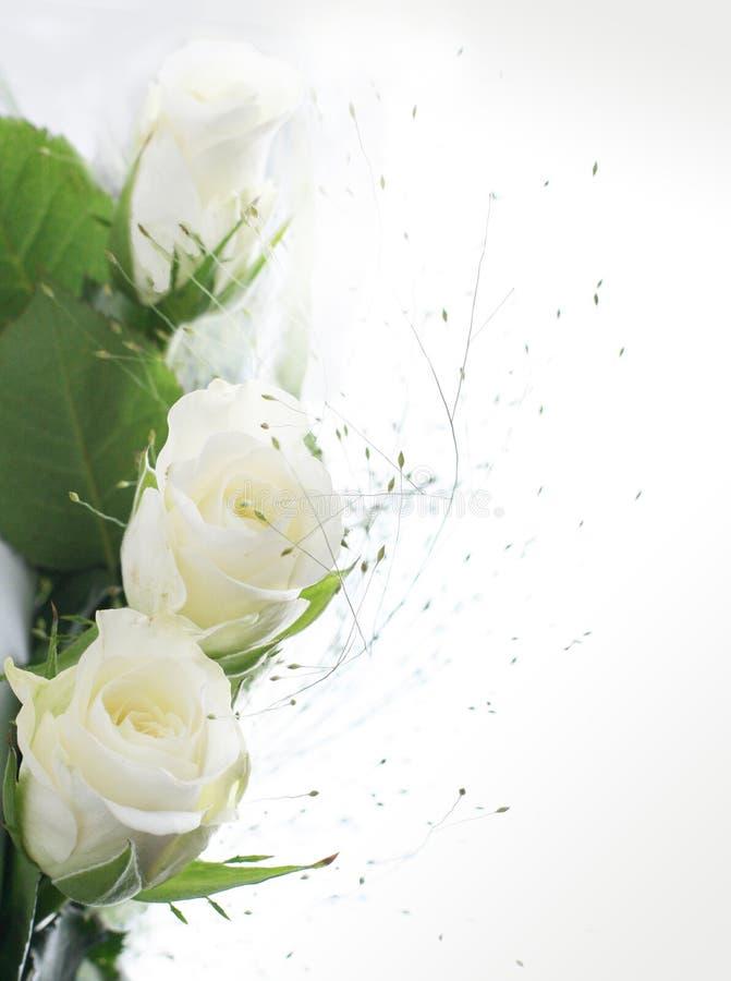 Pièce de vue avec les roses blanches photos stock