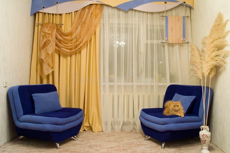 Pièce et chat de gilet. image libre de droits