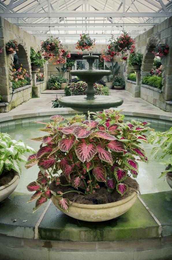 Pièce verte de jardin avec de belles centrales image stock