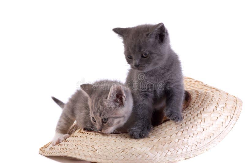 Pièces de chaton sur un fond blanc images libres de droits