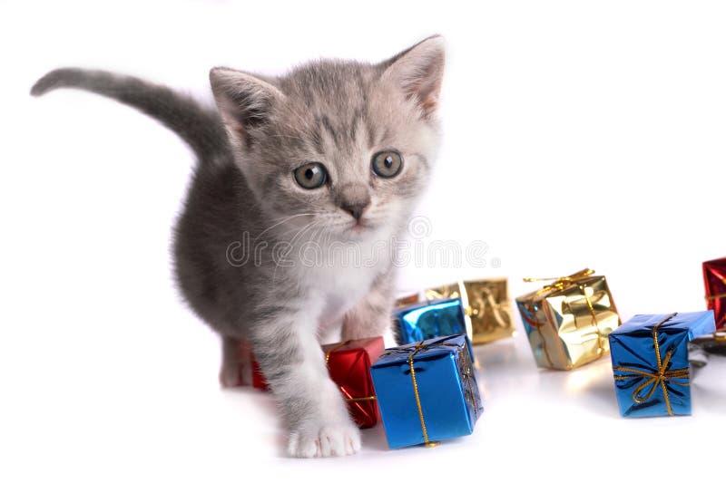 Pièces de chaton sur un fond blanc image stock