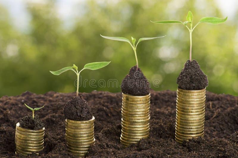 Pièces de monnaie d'or dans le sol avec la jeune usine d'isolement Accroissement d'argent cents billets d'un dollar s'élevant dan photographie stock