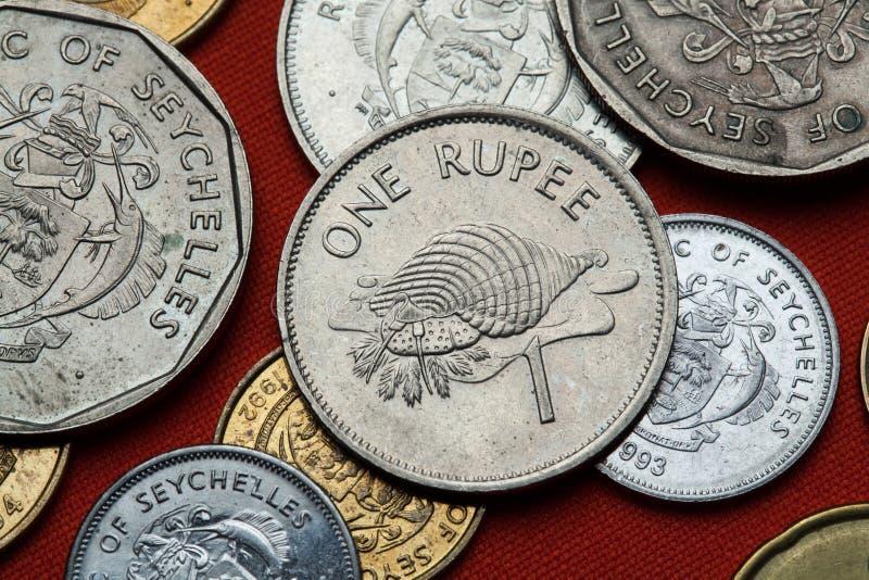 Pièces de monnaie des Seychelles Trompette de Triton (tritonis de Charonia) photo libre de droits