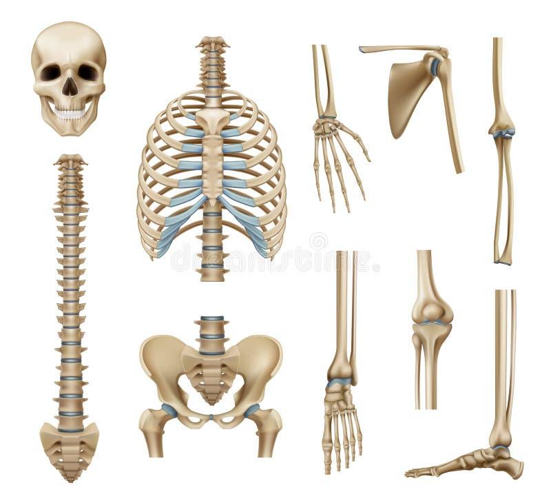 Pièces squelettiques humaines réalistes réglées illustration de vecteur