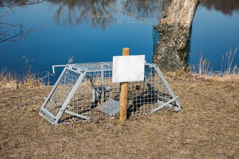 Piège de castor en nature libre image stock