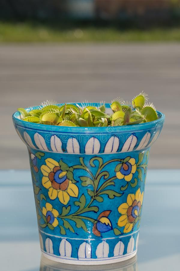 Piège de mouche de Vénus, usine carnivore dans le pot décoré par style marocain coloré sur la table devant la porte en verre de p photos libres de droits