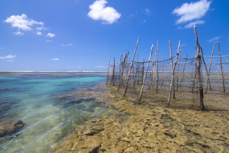 Pièges de poissons sur le récif brésilien image stock