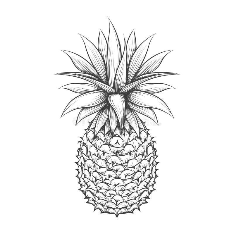 Piña dibujada mano stock de ilustración