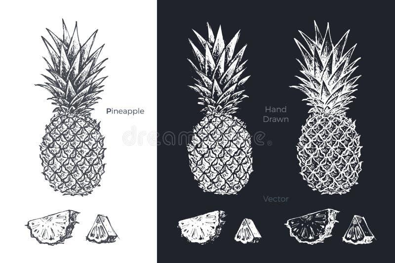 Piña dibujada mano Sistema del vector del bosquejo de las frutas libre illustration