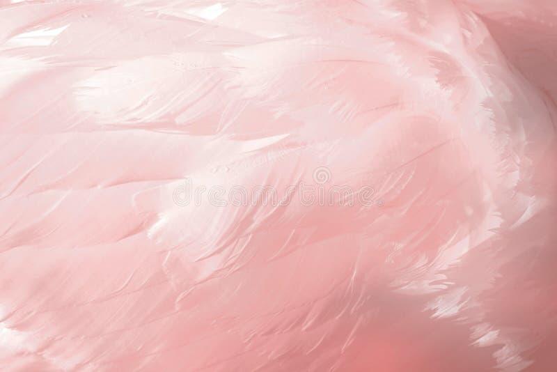 piórka napomykają menchie obraz stock