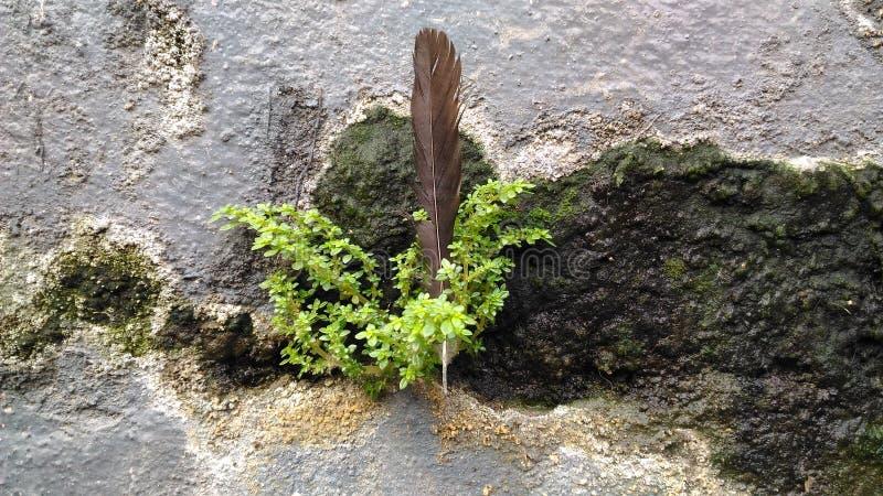 Piórko i roślina zdjęcia stock