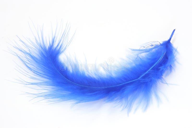 piórko, niebieski obrazy stock