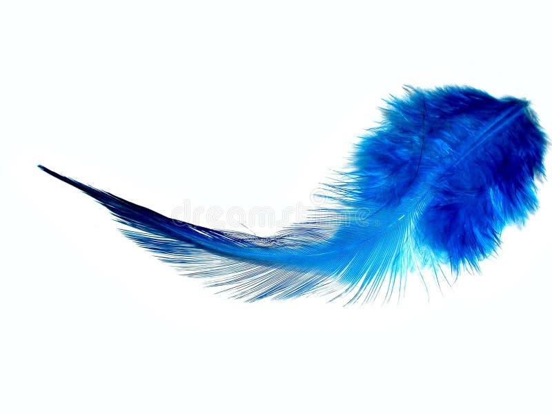 piórko, niebieski zdjęcie stock