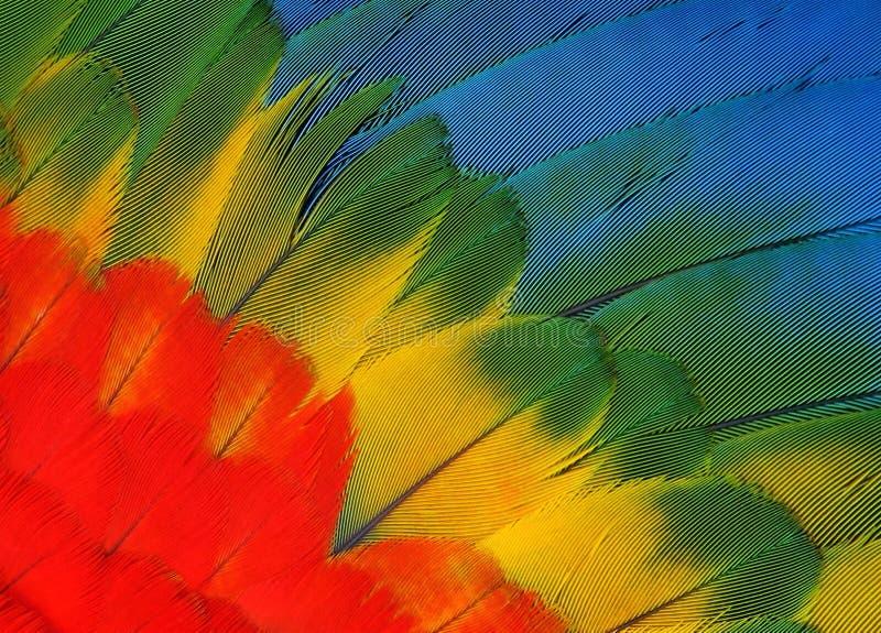 piórko papuga fotografia stock