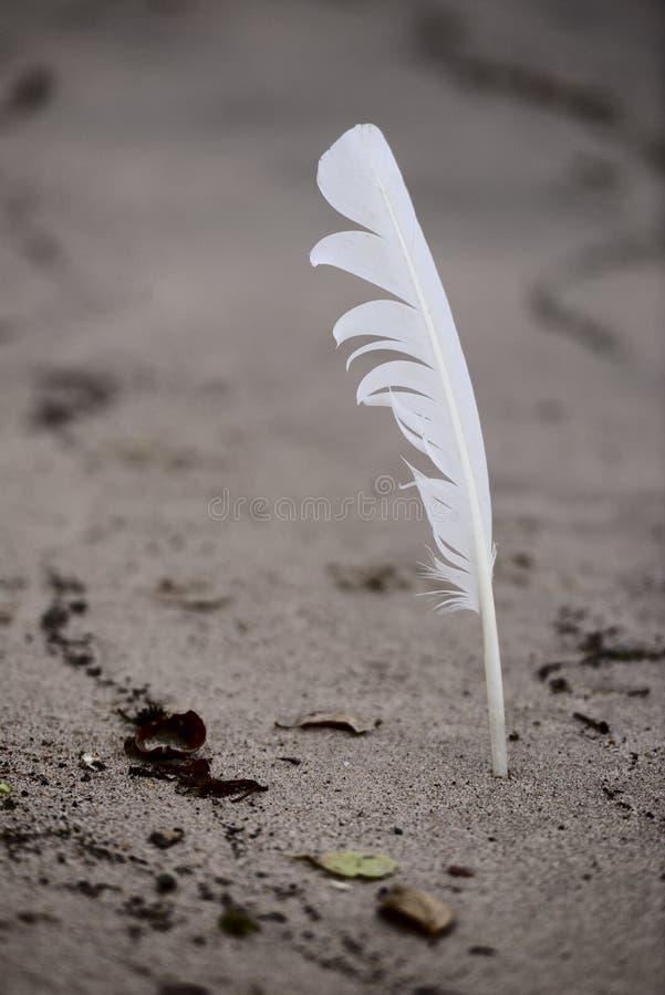 Piórko wtykający w piasku obrazy royalty free