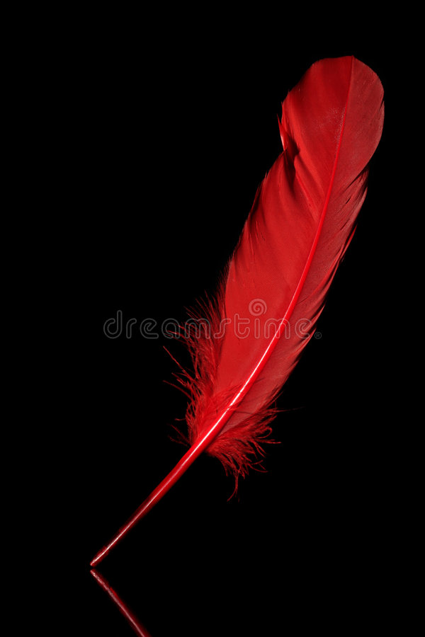 piórkowa czerwień obrazy royalty free
