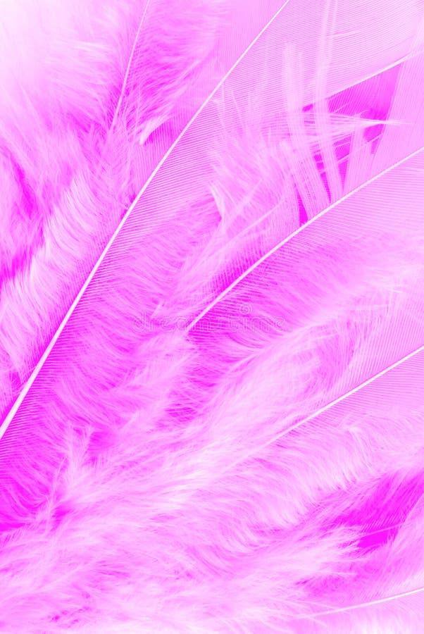 piórkowa makro- tekstura zdjęcia stock