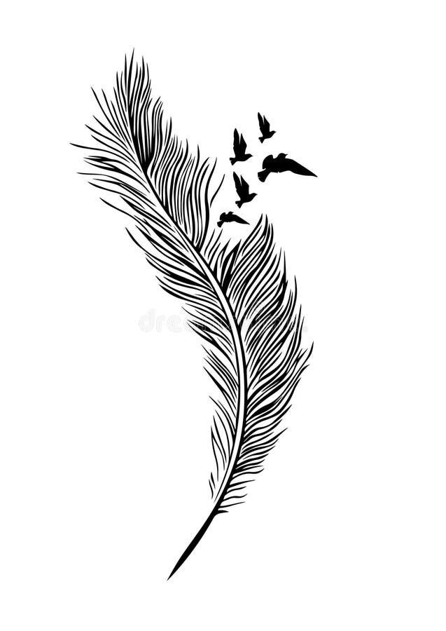 Piórkowi ilustracji, Piórkowego i Latającego ptaka ptaki, Ścienny projekt, Ścienni Decals royalty ilustracja
