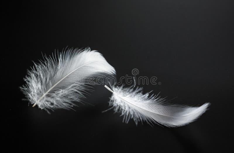 piórkowy biel fotografia stock