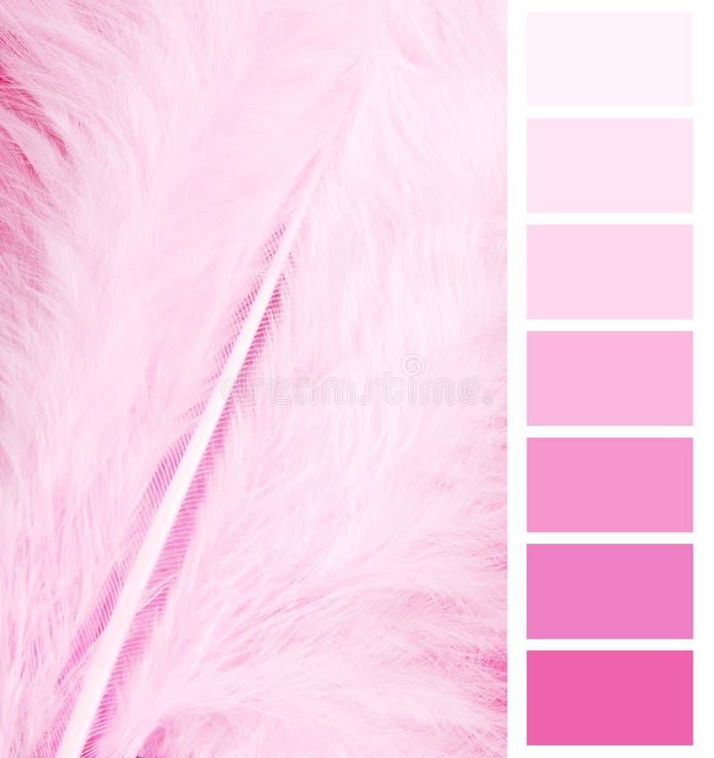 Piórkowy upierzenie menchii kolor fotografia stock
