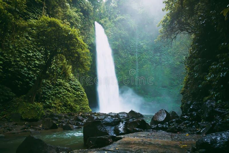 Più grande cascata con flusso potente in Bali Foresta e cascata tropicali fotografie stock
