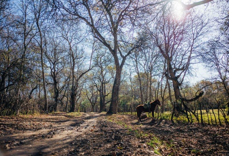 Più grande foresta naturale della noce di World's, accoccolata in una valle fertile delle bugie della catena montuosa di Kyrgyz immagini stock libere da diritti