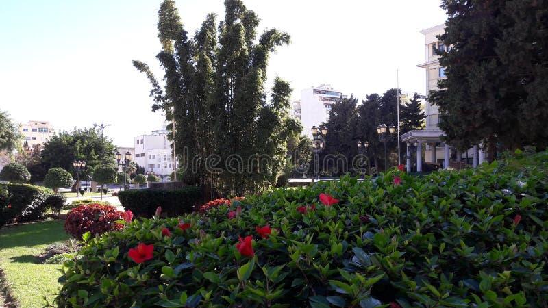 più piccola città di Tangeri del giardino immagini stock