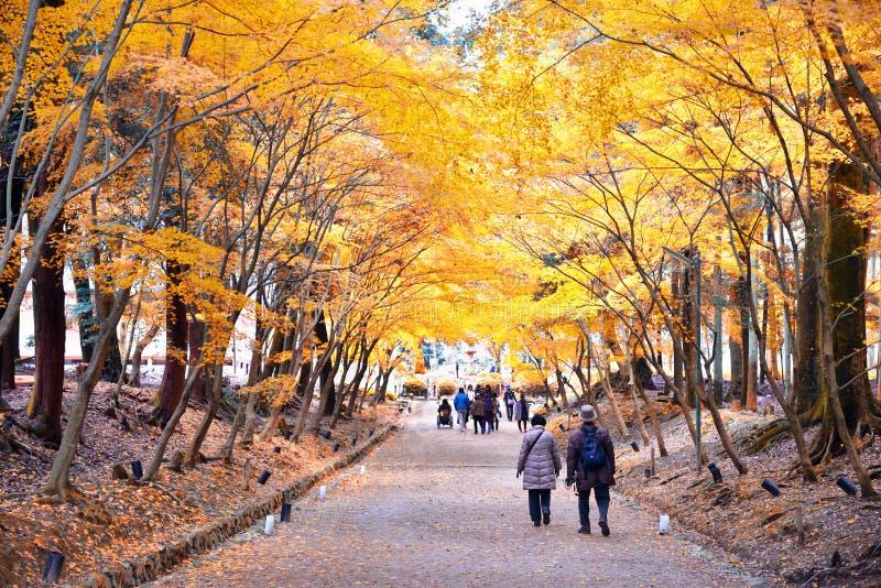 Più vecchia passeggiata delle coppie tramite le foglie di autunno immagine stock libera da diritti
