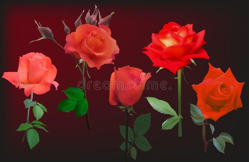 Pięć czerwieni róży kwiatów na ciemnym tle royalty ilustracja