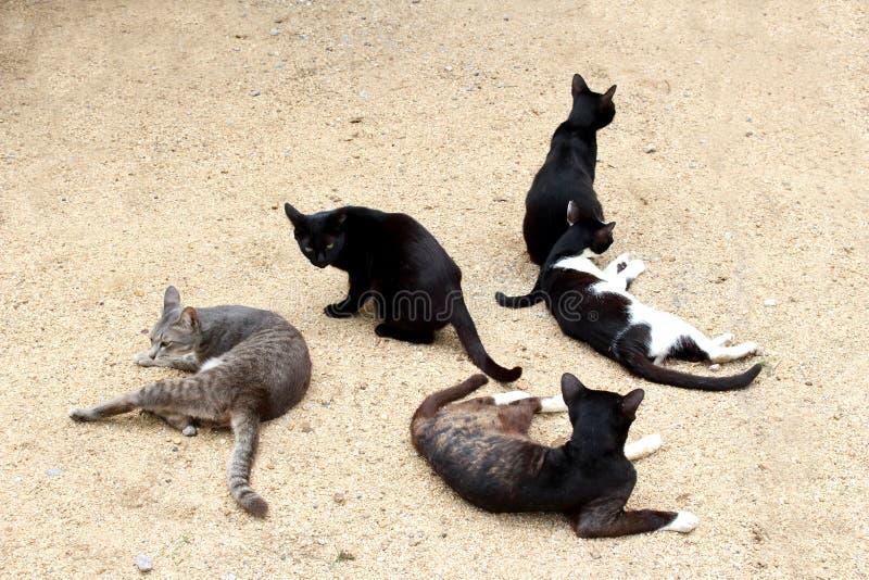 pięć kotów na ziemi obrazy stock