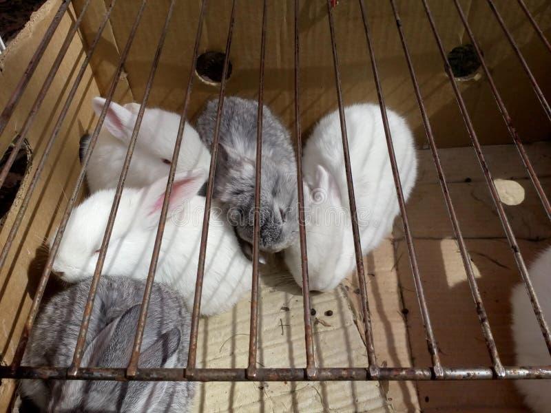 Pięć królików śpią na świetle słonecznym obrazy stock
