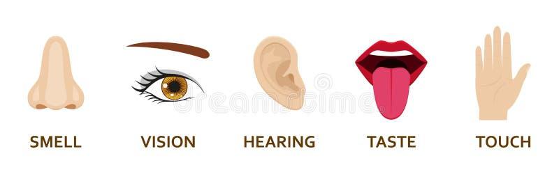 Pięć ludzkich sensów ikon ustawiających Kreskówka projekta nos, oko, ręka, ucho i usta, royalty ilustracja