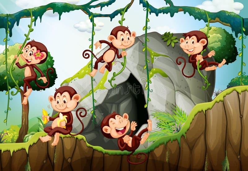 Pięć małp żyje w lesie ilustracji