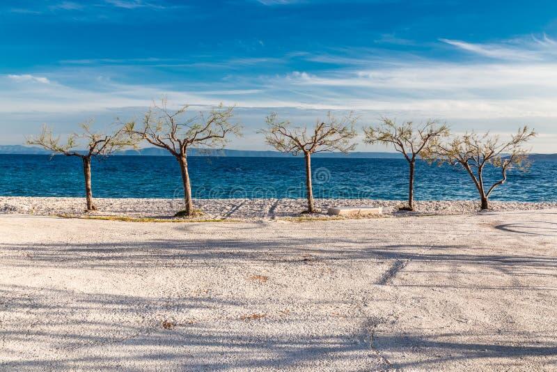 Pięć Odosobnionych drzew Na linii brzegowej - Chorwacja zdjęcia stock