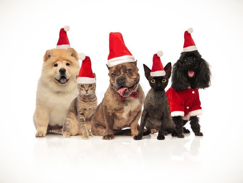 Pięć psów różni trakeny jest ubranym Santa kapelusze i koty obrazy royalty free