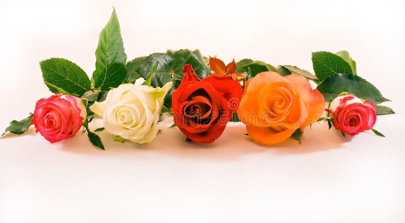 pięć róż rząd obraz royalty free