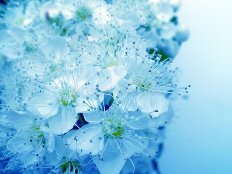 piękną niebieski obrazy stock