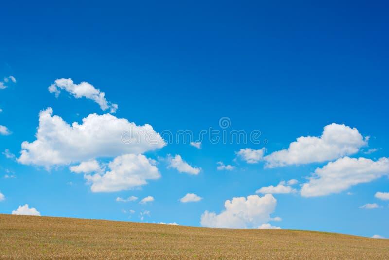 piękna łąka obrazy stock