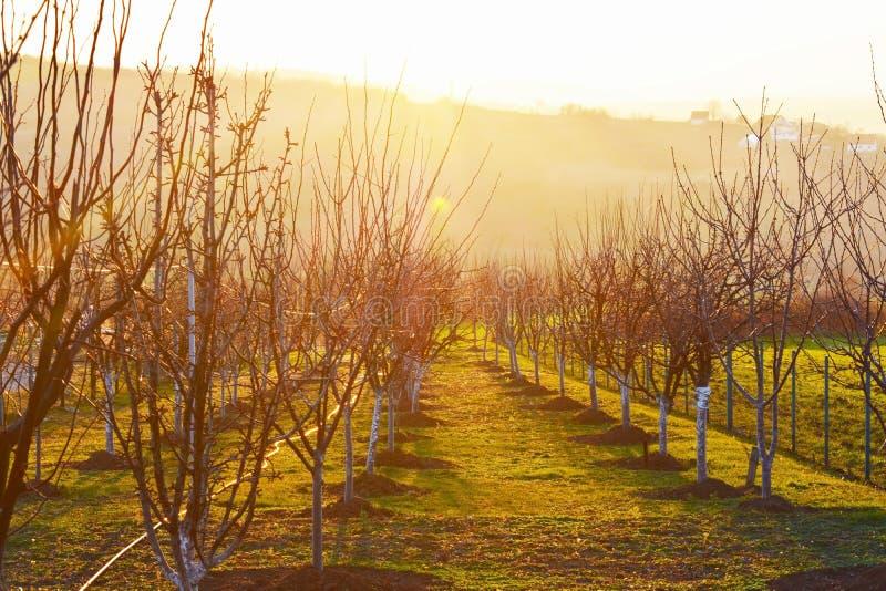 Piękna łąka z drzewami podczas zmierzchu zdjęcie royalty free