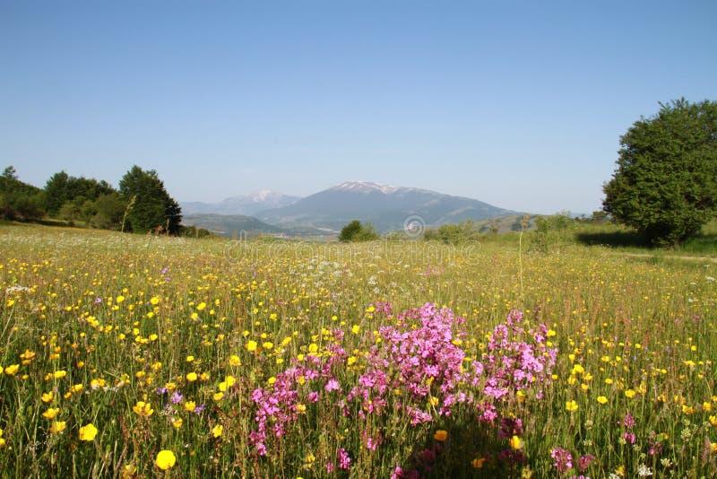 Piękna łąka z kwiatami i górą zdjęcia stock