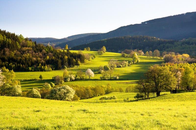 piękna łąkowa wiosna zdjęcie stock