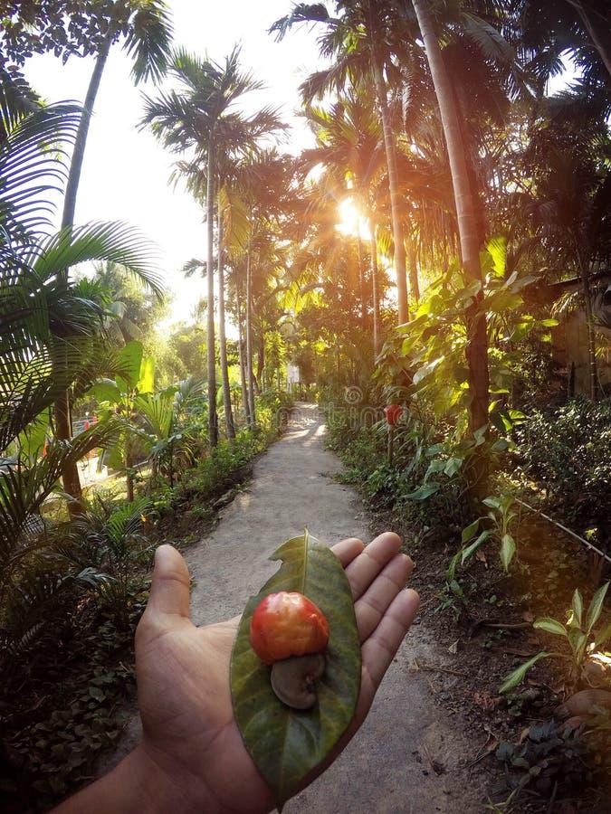 Piękna ścieżka z pięknym widokiem fotografia stock