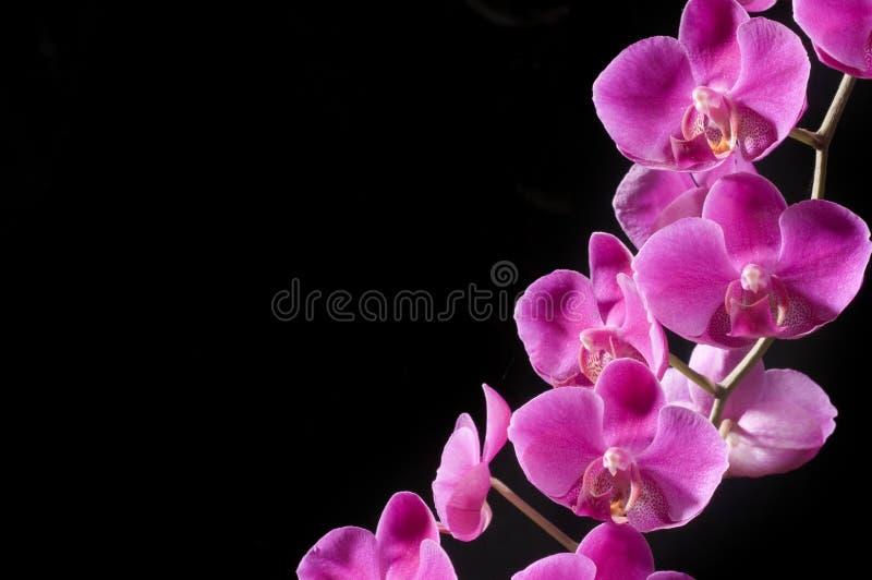 piękna ' zdjęcie royalty free