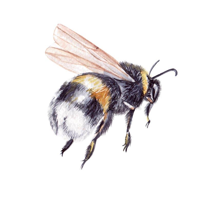 Piękna akwarela ustawiająca z insekt pszczołą royalty ilustracja